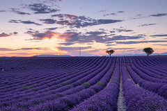 Lavender Field in Provence (Luca Quadrio) Tags: france color sunset nature flower beauty valensole hill travel tourism summer magenta plant sky purple beautiful french provence countryside landscape outdoors lavender field europe fragrance dramatic