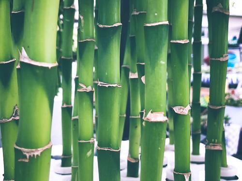 Bamboo #jcutrer