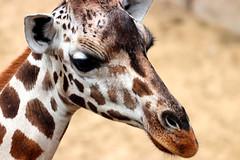 IMG_0881 (Bob_lewerissa) Tags: wildlands emmen zoo canon 80d 70200 l nonis usm