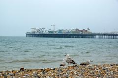 2018-05-18 06-02 England 967 Brighton, Palace Pier
