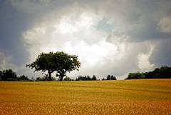 The lonely tree (Tobi_2008) Tags: baum tree landschaft landscape natur nature wolken clouds himmel sky sachsen saxony deutschland germany allemagne germania