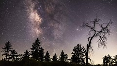 Mount Laguna Moonlit Milky Way Above Pine Trees Timelapse (slworking2) Tags: