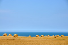 Wheat and Sea (jeangrgoire_marin) Tags: landscape sea wheat fields blue golden perspective sky normandie manche channel normandy