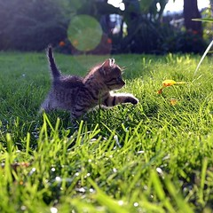 Bonne journée! 🐈🐾⠀ ⠀ (Ami_mal) Tags: chien chat animal animauxdecompagnie
