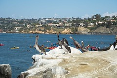 A Drive Up I-5 (andrewwebbcurtis) Tags: san diego california ca cali socal water boat summer travel wanderlust marine life sea lions seals nature animals