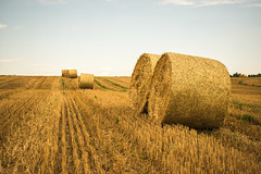 keep rolling (karwinho) Tags: hay straw field summer harvest poland grass cereal landscape village country countryside bale round baler gold sky clouds farm nature niemcza wheat composition large bales sloma siano bele polish hill row rolling roll roundbale largeroundbale