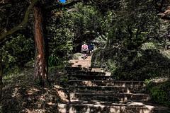 I didn't follow (Melissa Maples) Tags: batumi batum ბათუმი adjara აჭარა georgia gürcistan sakartvelo საქართველო asia 土耳其 apple iphone iphonex cameraphone მწვანეკეპი mtsvanecape ბოტანიკურიბაღი botanicalgarden staircase steps stairs trees forest man
