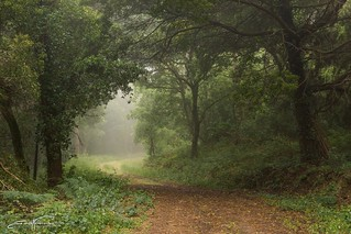 Morning mist in the woods