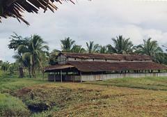 Muyu-Mandobo-004a (Stichting Papua Erfgoed) Tags: stichtingpapuaerfgoed pace pietvanmensvoort msc papua nieuwguinea nederlandsnieuwguinea irianjaya papuaheritagefoundation voormalignederlandsnieuwguinea