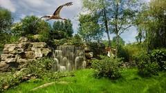 Waterfall - 5576 (ΨᗩSᗰIᘉᗴ HᗴᘉS +19 000 000 thx) Tags: cascade waterfall water bird nature hensyasmine namur belgium europa aaa namuroise look photo friends be wow yasminehens interest intersting eu fr greatphotographers lanamuroise tellmeastory flickering