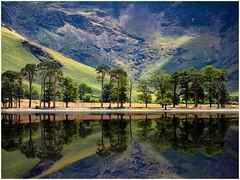 Buttermere Pines (urfnick) Tags: buttermere england unitedkingdom gb sundaylights o haer about filter