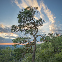 Pine near Waitzdorf at sunset (stefanfricke) Tags: pine kiefer sunset sonnenuntergang waitzdorf square sony ilce7rm2 sel1635z