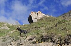 Nasco (bulbocode909) Tags: valais suisse moiry grimentz valdanniviers chiens nature montagnes rochers fleurs nuages paysages vert bleu jaune groupenuagesetciel