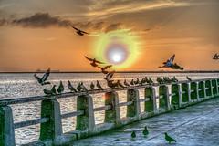 Morning Birds (Michael F. Nyiri) Tags: cabrillobeach sanpedro birds sunrise california southerncalifornia pacificocean