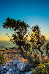 Another beautiful sunset at Leros... (Stelios Peros) Tags: fantastic nature leros greece tree sunset rocks landscape sky sea island