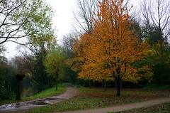 Vif (Atreides59) Tags: nature arbre arbres tree trees france nord jaune yellow vert green ciel sky nuages clouds rouge red pentax k30 k 30 pentaxart atreides atreides59 cedriclafrance