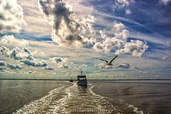 norddeich-norderney (fotos_by_toddi) Tags: rot fotosbytoddi voerde niederrhein norddeich norderney fähre schiff nordsee meer wolken clouds cloudy cloud wolke bewölkt blau möwen möwe sony sky sonyalpha77 sonne stimmung alpha a77 alpha77 sony77