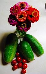 Pretty Harvest (dobie256) Tags: 2018 summer garden cucumber tomatoes zinnias flowers