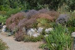 Denver Botanic Garden   2018.08.06   DSC_0375 (Kaemattson) Tags: denverbotanicgarden denverbg botanicgarden denver co colorado garden milehighcity green greenery landscape flowers