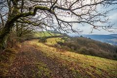 Winter Memories (*SanM.*) Tags: tree winter landscapes landschaft baum cold kalt field feld