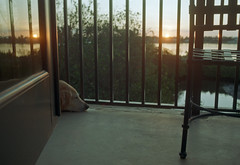 Morning Glow (PositiveAboutNegatives) Tags: leica slr leicaflexsl 50mm 50mmsummicron leicar morning sunrise daybreak agfa vista200 film analog coolscan dog lab labrador yellowlab