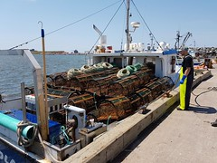 Day 3 - Lobster nets coming ashore at Etang du Nord (Bobcatnorth) Tags: lesilesdelamadeleine magdalenislands quebec canada summer 2018 cycling velo bicycle bicycling cycletouring bicycletouring touring tourdevelo gulfofstlawrence