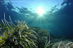 Atardecer submarino (Juanjo Gomez) Tags: posidonia mediterraneo underwater undersea fotosub formentera baleares