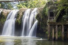 Paronella Waterfall 1 (judyclayton) Tags: paronellapark tropicalnorthqueensland missionbeach cassowarycoast waterfall blackandwhite