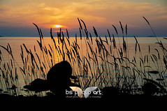 Silhouettes at the coast (BS PhotoArt) Tags: silhouettes sunset coast coastal summer wildgrass reed rocks water captureone c1
