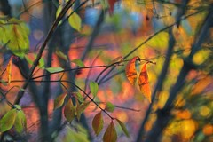 light and shadow (gwuphd) Tags: zeiss tessar 70mm f35 projectionlens diy bokeh light shadow leaves foliage