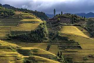 *Ping'an terraced rice fields @ public viewing*