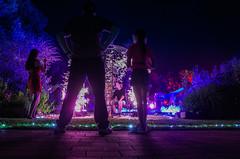 (formwandlah) Tags: gartenschau kaiserslautern lichtershow sommernacht illumination beleuchtung nacht night langzeitbelichtung long exposure ricoh gr pentax lichterkette streetphotography