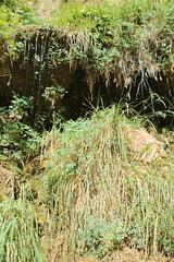 IMG_3758 (Egypt Aimeé) Tags: narrows zion national park canyons pueblos utah arizona
