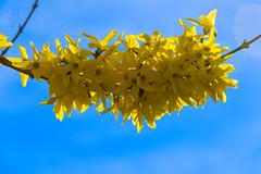 Fiori_Gialli (DarioMarulli) Tags: fiori flowers giallo yellow primavera laquila abruzzo italy italia nikon nikonclubit natura nature nationalgeographic fiore d3200 18105mm 18105