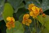 MS Bot Garten 29092017 17 2048 (Dirk Buse) Tags: münster nordrheinwestfalen deutschland deu natur nature outdoor pflanze blüte color farbe colour nrw germany de mft m43