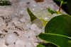 Granizo (ruimc77) Tags: nikon d700 sigma 105mm f28 os ex dg hsm macro 11 granizo hail mexico city ciudad méxico cdmx df nature naturaleza natureza ice gelo hielo