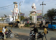 rajasthan road scene (kexi) Tags: rajasthan india asia road animals cows monkeyking birds wires people samsung wb690 february 2017 motorbikes statue temple instantfave