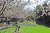 Kirschbäumen im Japanischen Garten (Valeria Panzetta) Tags: flower blumen hanami japanese japanischen garten garden giardino nature berlin