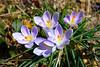 Spring is Real (Andy Marfia) Tags: chicago andersonville spring flower ground d7100 1685mm 1640sec f56 iso100