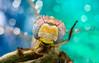 Heyy.. (Dragon Fly) (Can Tunçer) Tags: c can cantunçer cantuncer canon canon6d macro makro macros macrophotography micro mikro makros mpe65mm tunçer turkey turkiye türkiye tuncer stack stacking izmir yongnuo