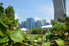 View from Gardens by the bay (CitrusPhotography) Tags: singapore plant tree nature gardens chinese japanese water fountain leaf raindrop tower architecture animal varan birds bonsai farm wildlife landscape skyline botanical turtle see river marina bay