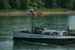 MS GUTTENBERG (Lutz Blohm) Tags: msguttenberg speyer rhein rheinschifffahrt binnenschifffahrt binnenschiffe gütermotorschiff fluskilometer402 rheinzutal sonyfe70300goss sonyalpha7aiii niedrigwasser