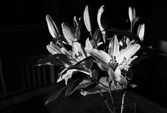 lily (Leanne@123) Tags: blackandwhite flower lily shadows morninglight