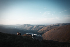 (Bazzerio) Tags: adventure hike travel camping campvibes explore england sheep analogue vintage film 35mm exploredreamdiscover grain grainy lakedistrict landscape red screes x100f fujifilm