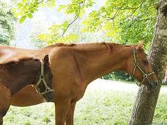 Ballenberg (M_Strasser) Tags: ballenberg olympusomdem1 olympus switzerland schweiz suisse svizzera pferd pferde horse horses