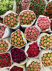 Flower Market (cowyeow) Tags: china asian asia 香港 shop store plants flowers red tulips composition color hongkong flowermarket arrangement redflowers spring springmarket street flower bulbs