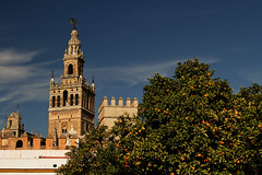 Cathedral and orange tree (sonofwalrus) Tags: canon eos7d slr seville spain europe catedraldesevilla sevillecathedral architecture spire church building tree oranges orangetree leaves
