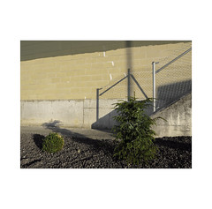 Lights and shadows.  ( Pamplona ) (José Luis Cosme Giral) Tags: lightsandshadows minimalism urbannature wall plants fench textures earth olympus pamplona navarra