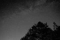 We are floating in space (NikNak Allen) Tags: dartmoor night stars star milkyway tree up look darkskies sky longexposure