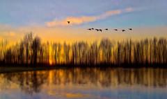 A-well-a everybody's heard about the bird! (Wim Koopman) Tags: flowing glowing lines atmosphere mood holland netherlands dutch goudriaan slingelandseplassen